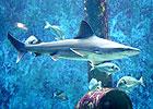 Sortie à la Mulatière: Aquarium de Lyon