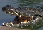 Sortie à Pierrelat: Ferme aux crocodiles