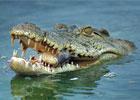 Sortie à Civaux: La planète des Crocodiles