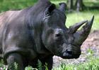 Sortie à Peaugres: Safari de Peaugres
