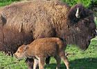 Sortie à Rhodes: Parc Animalier de Sainte-Croix