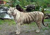 Sortie à Pessac: Zoo de Bordeaux-Pessac