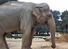 Sortie à La Barben: Zoo de la Barben