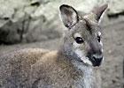 Sortie à Emance: Réserve Zoologique de Sauvage