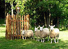 Sortie à Vasles: Parc Mouton Village