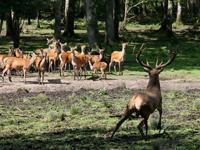 Sortie à Treigny: Parc Animalier