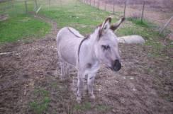 Sortie à Ramonville saint agne: les animaux de la ferme de 50