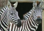 Sortie à La Boissière du Doré: Zoo de la Boissière du Doré