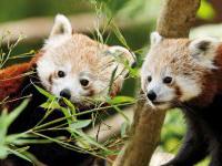 Sortie à Trégomeur: Zoo de Trégomeur