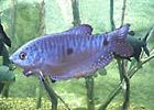 Sortie à Le bugue sur vezere: Parc aquarium du Périgord noir