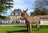 Sortie à Blanquefort: Les Jardins de Mirabel