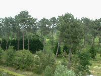 Sortie à Pessac: Site du Bourgailh