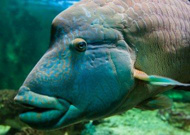 Sortie à Vannes: Aquarium de Vannes