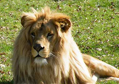 Sortie à Mervent: Natur'Zoo de Mervent