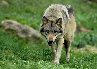 Sortie à Pradinas: Parc animalier de Pradinas