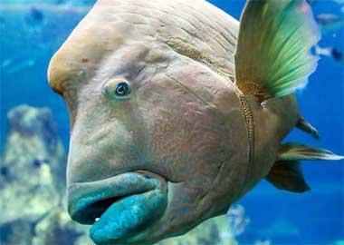 Sortie à Biarritz: Aquarium de Biarritz