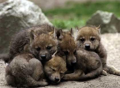 Sortie à Orlu: La Maison des Loups