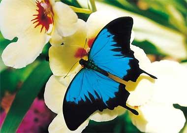 Sortie à Hunawihr: Le Jardin des papillons