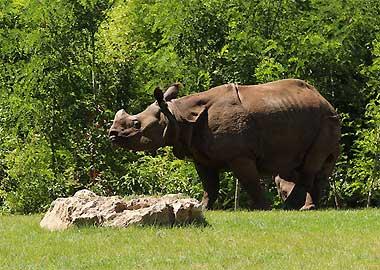 Sortie à La flèche: Zoo de la Flèche