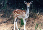 Sortie à Bouzigues: Ferme Zoo de Bouzigues