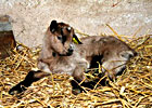 Sortie à Giesheim près Molsheim: La Chèvrerie