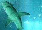 Sortie à Paris: Aquarium de Paris