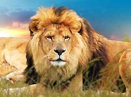 Sortie à Plaisance du touch: Zoo African Safari