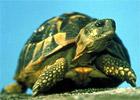 Sortie à Gonfaron: Village des tortues