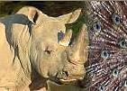 Sortie à Lille: Parc Zoologique de Lille