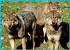 Sortie à Villiers en bois: Zoodyssée