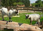 Sortie à Mollégès: Parc Animalier l'Arc En Ciel